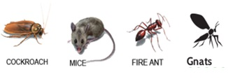 Mice-gnats-fruit flies